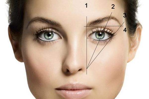 Прикладывая карандаш по указанным линиями, вы сформируете начало, высшую точку и конец вашей брови