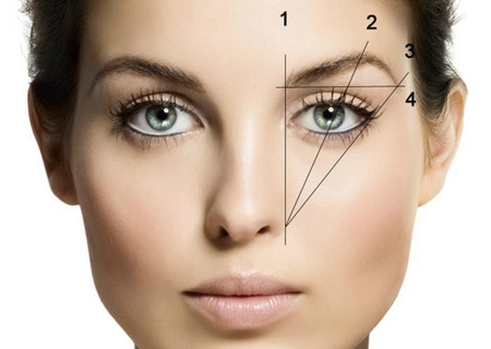 При формировании брови обязательно учитывайте пропорции лица!
