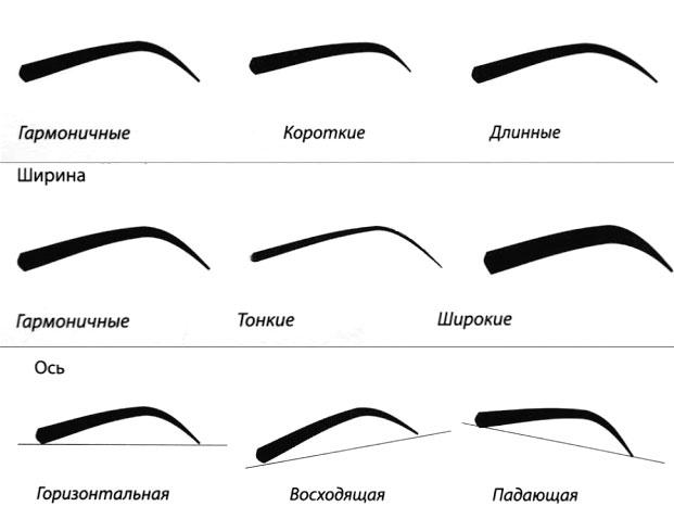 Существует множество подтипов очертаний роста волосков