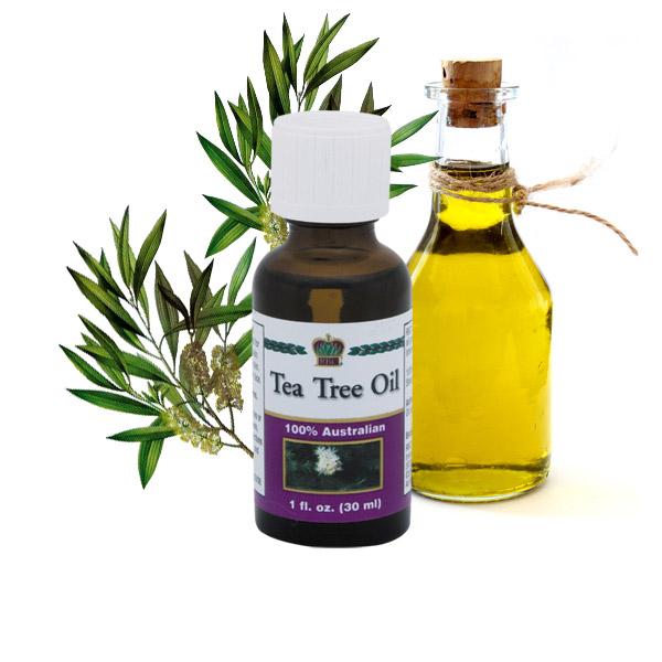 Масло чайного дерева в двух бутылочках и ветка чайного дерева
