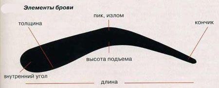 Как правильно выщипать брови и подобрать для них идеальную форму
