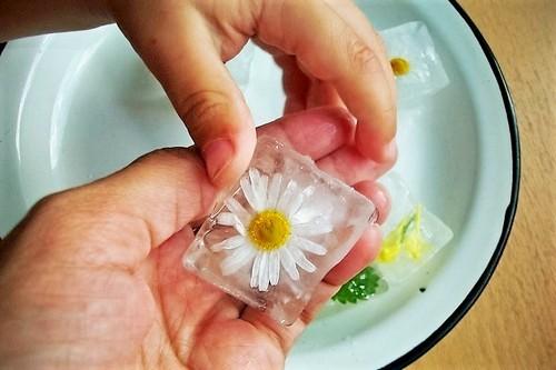 2 в 1: аптечная ромашка для кожи лица, как косметическое и лекарственное средство