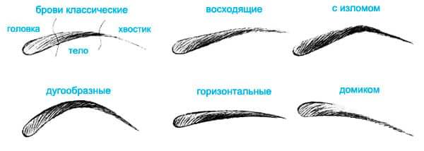 Схематическое изображение бровей