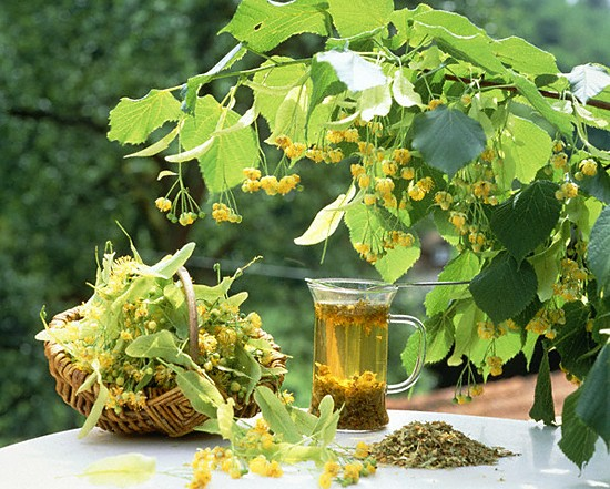 Лекарственные травы от жирности волос