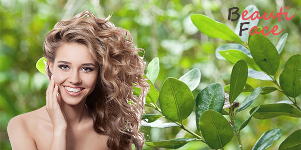 Масло бей для волос в качестве укрепляющего средства: лучшие рецепты масок