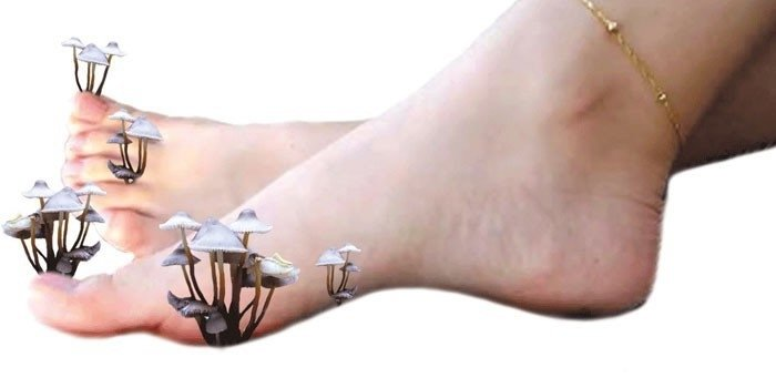 Грибы на ногах