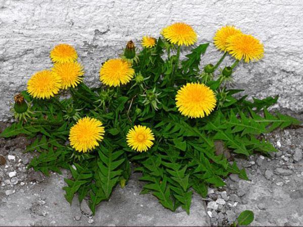 Травы для волос, сделают прическу гуще и помогут ускорить их рост